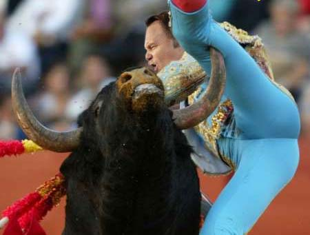 bull-fighter-nutt